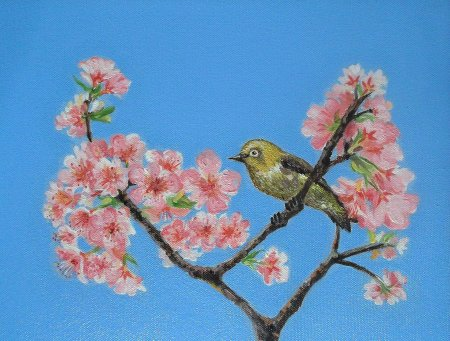 Bird, Mejiro,White eye bird,Cherry Blossom, Japan, Sakura, Blossom, blue sky, nature, Cherry flowers, pink flowers,